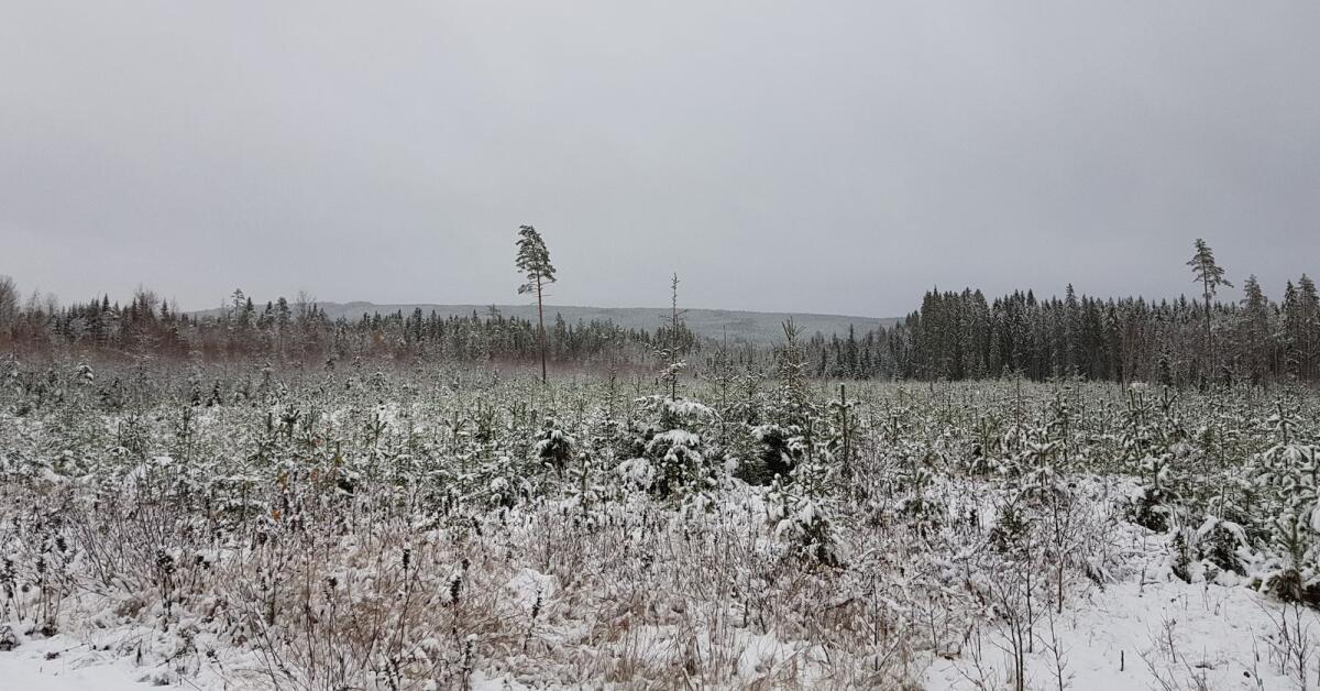 Blir det en vit jul i Värmland? – här ger SMHI svaret